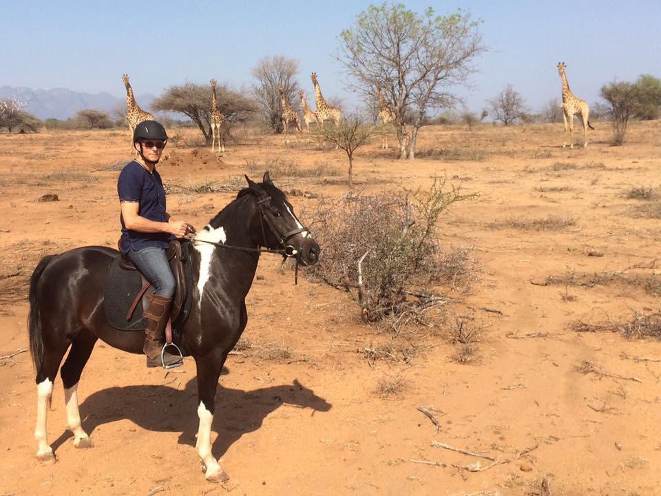 Villa Kudu's horses, Zahirah, anglo arab mare
