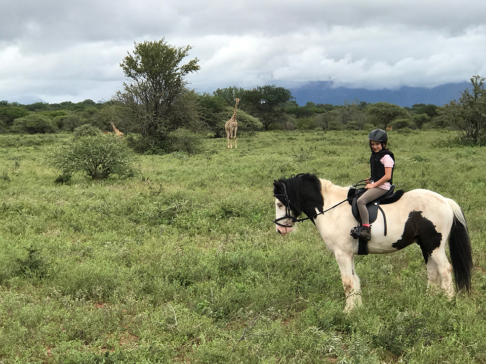 Villa Kudu's horses, Silky, gibsy cob